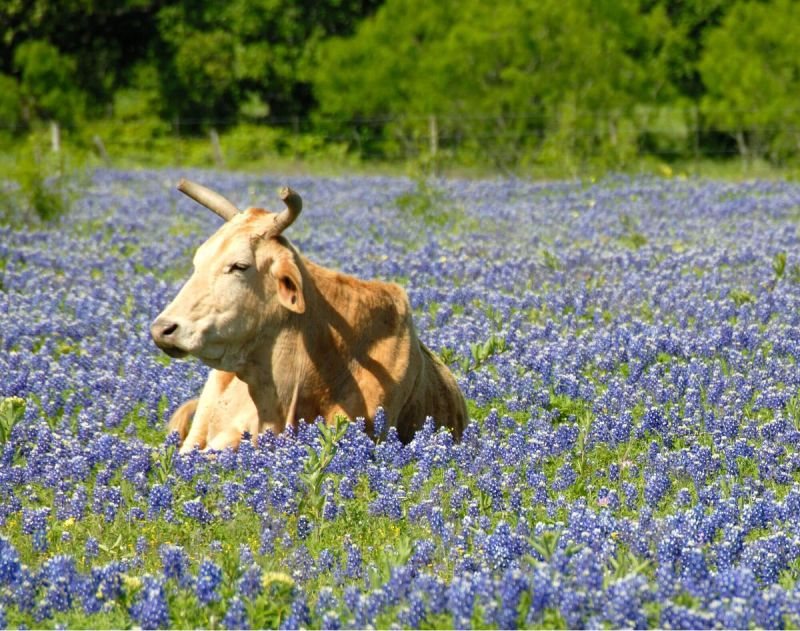 Seeing The Flowers As Well As The Bull: What is Thought Leadership?